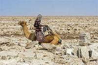 Traditioneller Abbau von Salz am Assale Salzsee. Afar Hirte belädt ein Dromedar mit Salzplatten mit einem Einzelgewicht von bis zu 7 kg
