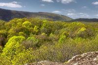 Blick auf den Pfaelzerwald