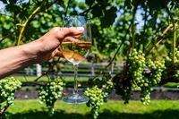 a glass of white wine against grapevines