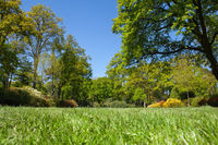 Green grass, trees and lawn in a public park.