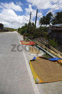 Drying Rice on a rural Country Road on Bohol Island