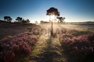 illuminated countryside path at sunrise