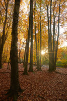 Urwald Sababurg in Hessen zur Herbstzeit