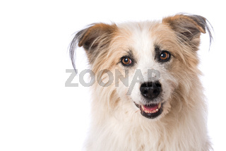 Portrait of a cute dog