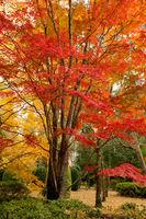 Beautiful deciduous trees in full colour in Autumn
