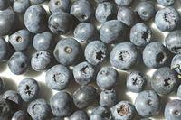 Vaccinium corymbosum, Kulturheidelbeere, northern highbush blueberry