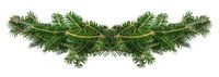 Fir tree branch frame on white