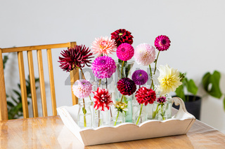 Set of bright dahlias for home interior
