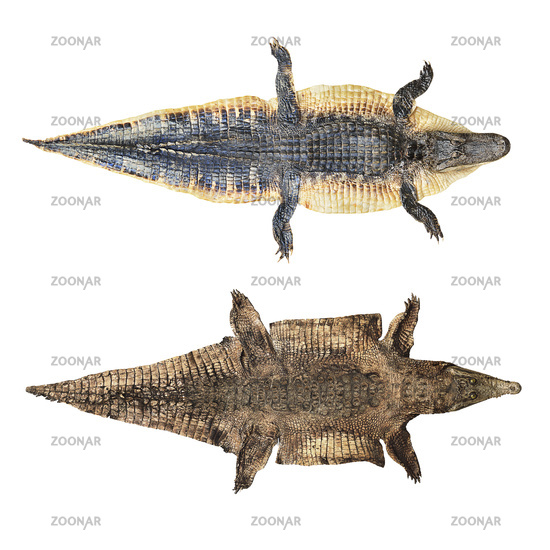 crocodile and alligator skin isolated on white