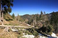 umgestürzter Baum in der Natur