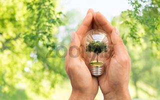 hands holding lightbulb with tree inside