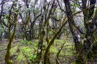 Nationalpark Garajonay auf La Gomera