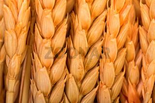 Golden Wheat Ears