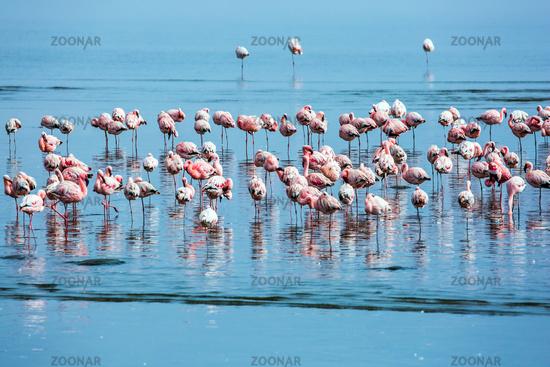 Flock of magnificent birds