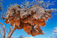 Großes Webervogel-Nest in Namibia | Big nest of weaver birds in Namibia