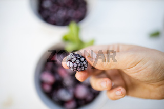 Female hand holding a fresh blackberry above more berries