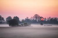 misty sunrise on Dutch farmland