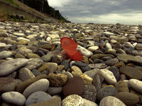 Plastic Cup crumpled and thrown on pebble beach of sea
