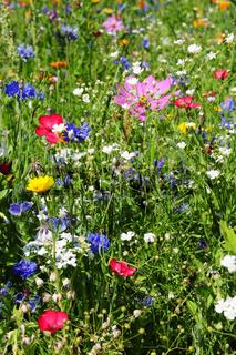 Blumenwiese mit Sommerblumen