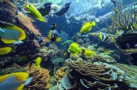Aquarium mit Korallen und Tropenfischen