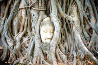 Buddha head in tree roots in ruins of Wat Mahathat temple. Ayutthaya, Thailand