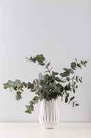Bouquet of eucalyptus