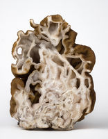 Cuted mushroom morel on white background.
