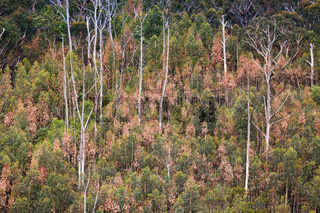 Burnt and unburnt bushland of Blue Mountains after bush fires