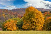 Laubfärbung goldener Oktober im Harz
