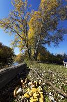 Picked mushrooms lie in heap in sunny meadow at fall season