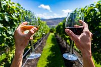 couple cheering white, red wine glasses