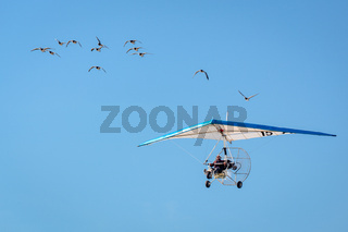 Christian Moulec and his Geese