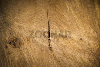 Tree trunk cross section background
