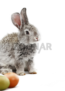 Cute gray rabbit with Easter eggs isolated on white