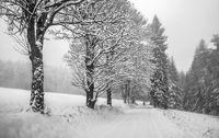 Spaziergang im Winterwald (Kottenheide) L1001675.jpg