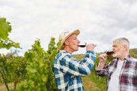 Erntehelfer trinken ein Glas Rotwein
