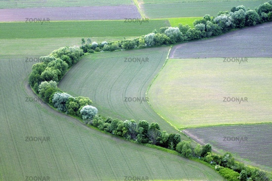 agricultural fields in spring with trees