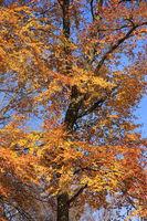 Laubbaeume in Herbstfarben