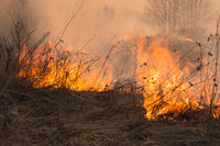 Forest fire burning, Wildfire close up at day time