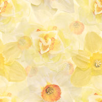 Seamless floral design with daffodil flowers for background