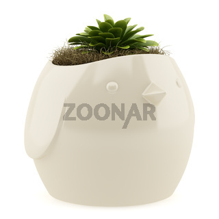 potted houseplant isolated on white background