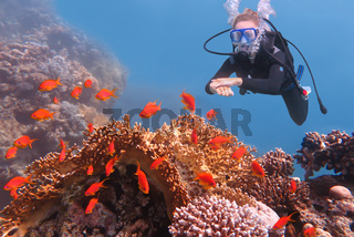 Female diver looks at orange fishes in blue sea