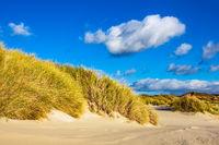 Landschaft mit Dünen auf der Insel Amrum