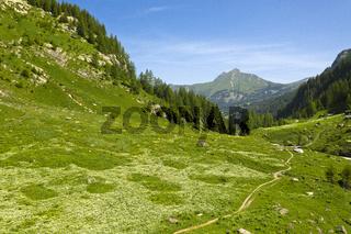 Grüne Berrgwiesen im Geltenbach-Tal, Lauenen, Berner Oberland, Kanton Bern, Schweiz
