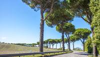 Beautiful avenue on a country road near Orvieto Umbria Italy province of Terni