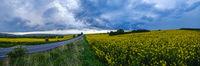 Spring yellow flowering rapeseed fields