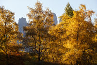 Geisler or Odle Dolomites mountain group rocks behind the autumn trees