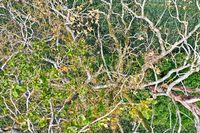 abgestorbener Baum von oben