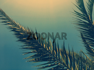 Palm tree leaves and the sky, summertime travel background
