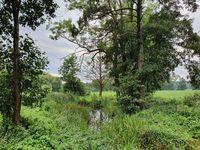 Creek in Spreewald in Germany